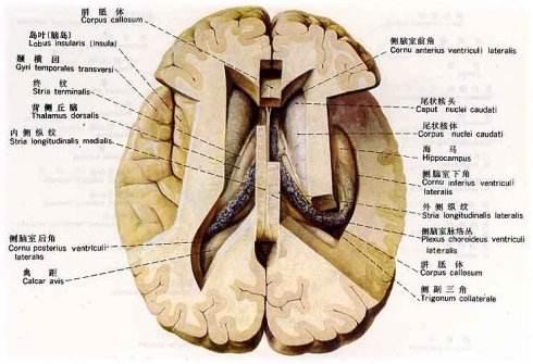 北京好的癫痫病医院